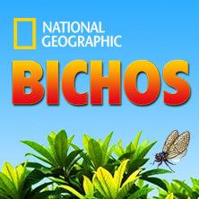 homepage_PT_bichos